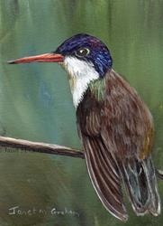 Art: Violet Crowned Hummingbird ACEO by Artist Janet M Graham