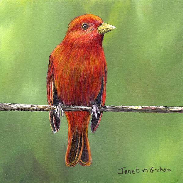 Art: Summer Tanager by Artist Janet M Graham
