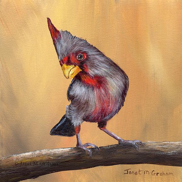 Art: Pyrrhuloxia by Artist Janet M Graham