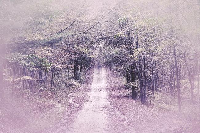 Art: Path Forward by Artist Carolyn Schiffhouer