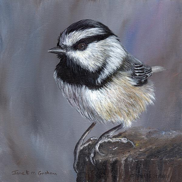 Art: Mountain Chickadee No 3 by Artist Janet M Graham
