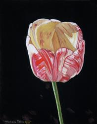 Art: The Tulip by Artist Melissa Tobia