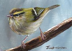 Art: Hume's Leaf Warbler ACEO by Artist Janet M Graham