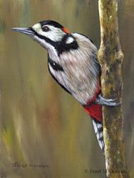 Art: Great Spotted Woodpecker by Artist Janet M Graham