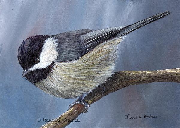Art: Carolina Chickadee by Artist Janet M Graham