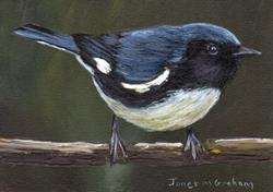 Art: Black Throated Blue Warbler ACEO by Artist Janet M Graham
