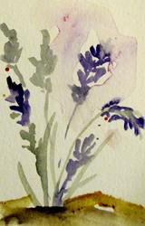 Art: Lavender Aceo by Artist Delilah Smith