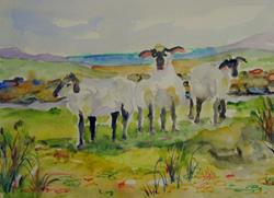 Art: Meadow Sheep by Artist Delilah Smith