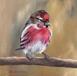 Art: Common Redpoll No 2 by Artist Janet M Graham