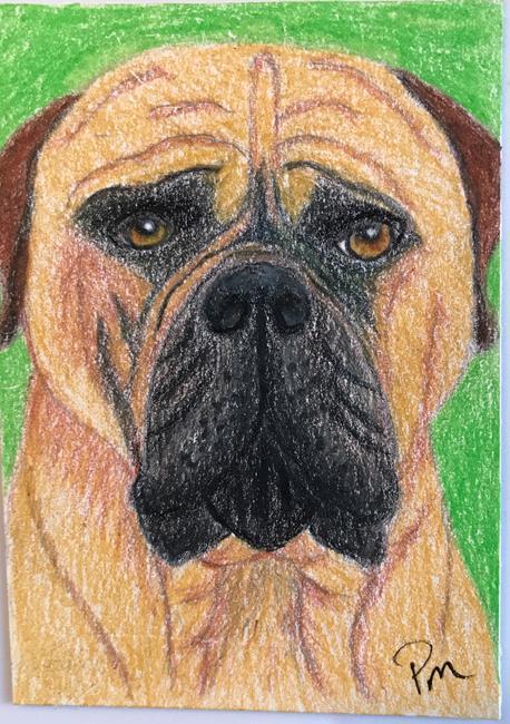 Art: Roger Bullmastiff ACEO by Artist Pamela Godwin Manning