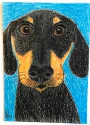 Art: Jake the Dachshund ACEO by Artist Pamela Godwin Manning