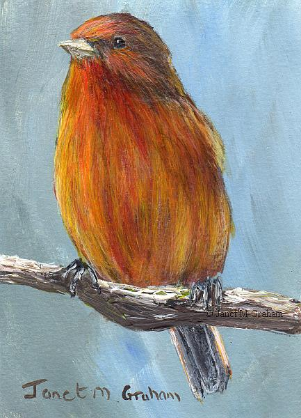 Art: Akepa ACEO by Artist Janet M Graham
