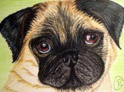 Art: Pug ACEO by Artist Pamela Godwin Manning