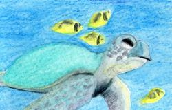 Art: Turtle in the Bay by Artist Pamela Godwin Manning