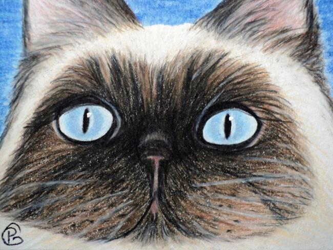 Art: Himalayan Cat by Artist Pamela Godwin Manning