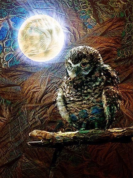 Art: Night Owl by Artist Alma Lee