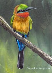 Art: Red Throated Bee - eater by Artist Janet M Graham