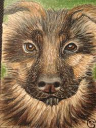Art: German Shepherd Puppy by Artist Pamela Godwin Manning