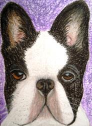 Art: English Bull Dog by Artist Pamela Godwin Manning