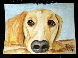 Art: Yellow Lab Dog by Artist Pamela Godwin Manning