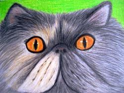 Art: Grey Persian Cat by Artist Pamela Godwin Manning