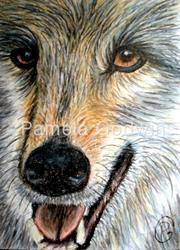Art: Hungry Wolf by Artist Pamela Godwin Manning