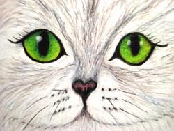 Art: White Persian Cat with Green Eyes by Artist Pamela Godwin Manning