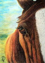 Art: Brown Horse by Artist Pamela Godwin Manning
