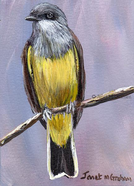Art: Western Kingbird ACEO by Artist Janet M Graham