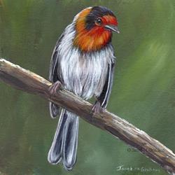 Art: Red Faced Warbler by Artist Janet M Graham