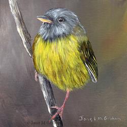 Art: Mourning Warbler by Artist Janet M Graham