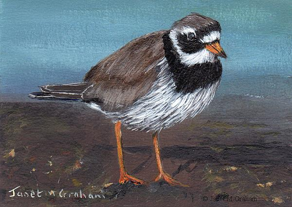 Art: Common Ringed Plover ACEO by Artist Janet M Graham