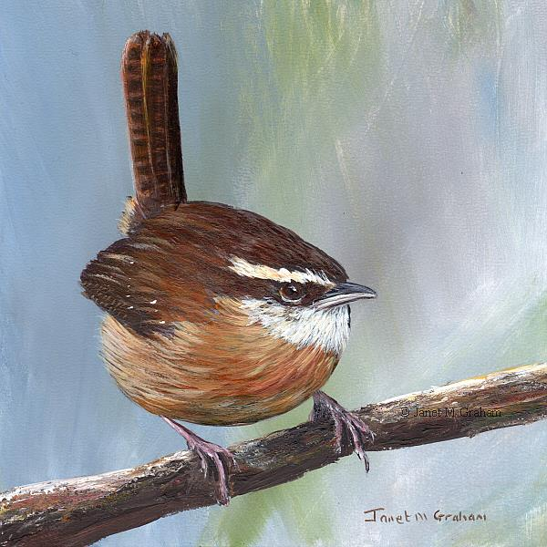 Art: Carolina Wren by Artist Janet M Graham