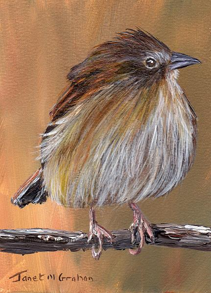 Art: BOTTERI'S SPARROW ACEO by Artist Janet M Graham