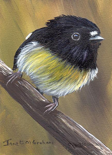 Art: Tomtit ACEO by Artist Janet M Graham