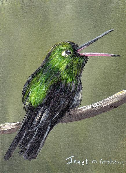 Art: Cuban Emerald ACEO by Artist Janet M Graham