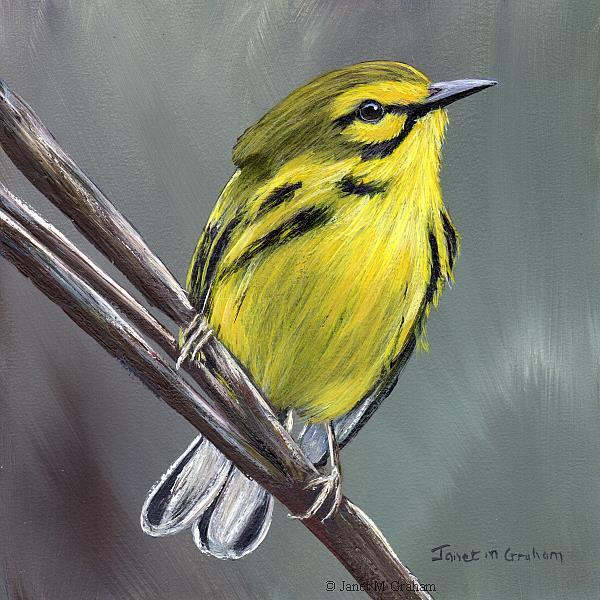 Art: Prairie Warbler by Artist Janet M Graham