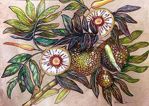 Art: Bread Fruit (Botanical) by Artist Alma Lee