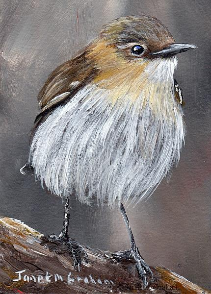 Art: Northern Wheatear ACEO by Artist Janet M Graham
