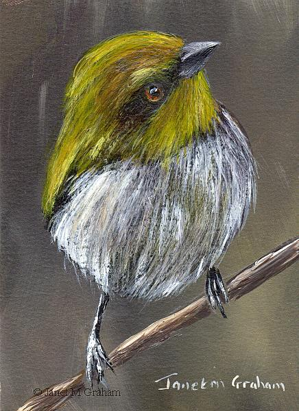 Art: Yellow Throated Bush Tanager ACEO by Artist Janet M Graham