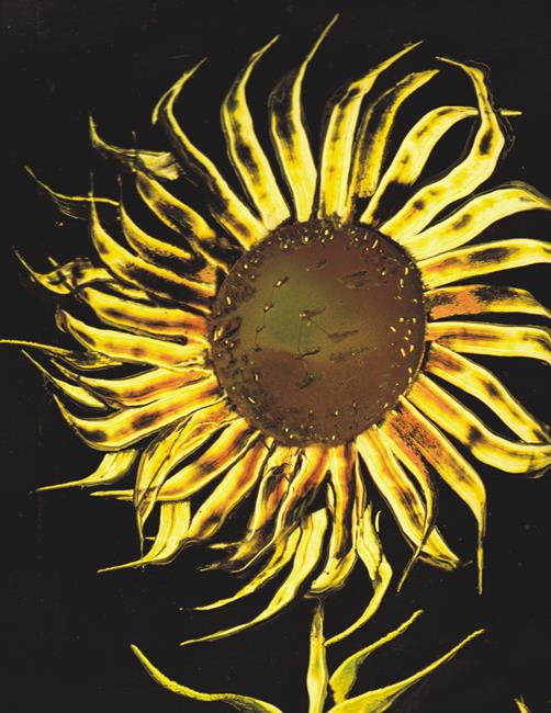 Art: Sunflower by Artist Leonard G. Collins