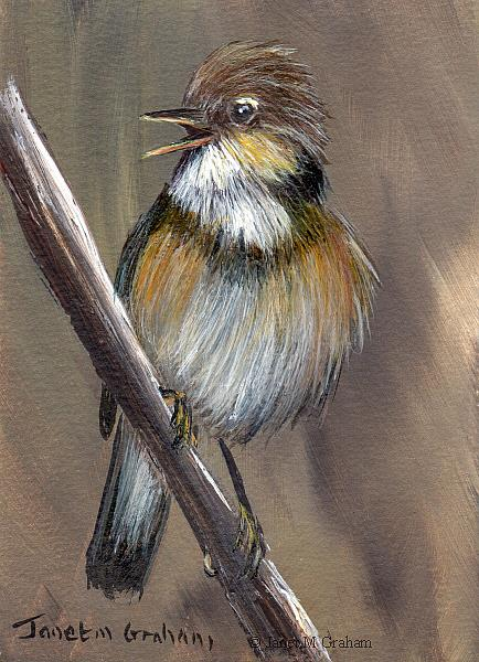 Art: Eurasian Reed Warbler ACEO by Artist Janet M Graham