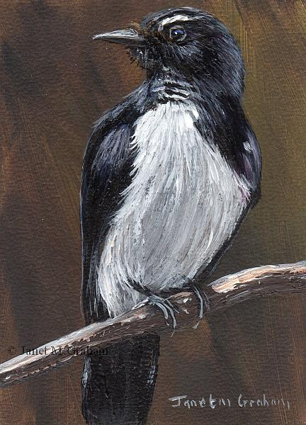 Art: Willie Wagtail ACEO by Artist Janet M Graham