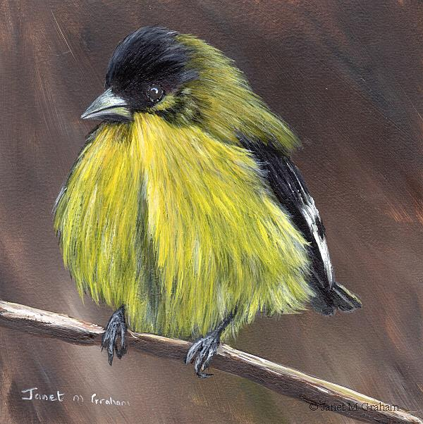 Art: Lesser Goldfinch by Artist Janet M Graham