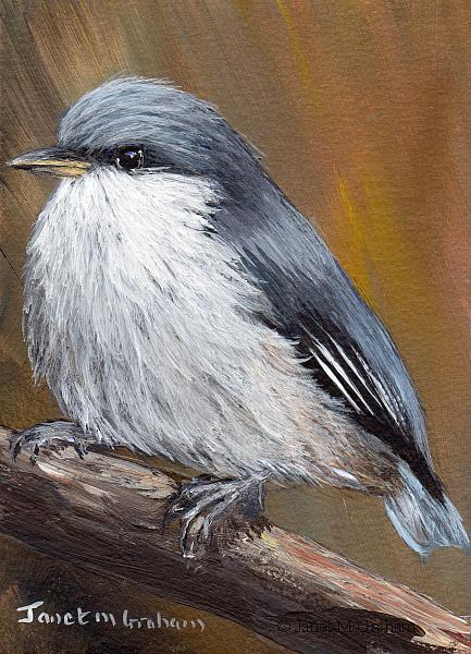 Art: Pygmy Nuthatch ACEO by Artist Janet M Graham