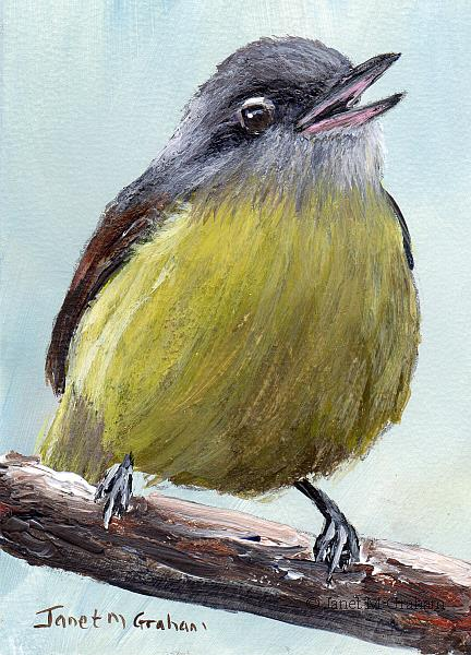 Art: Warbling Vireo ACEO by Artist Janet M Graham