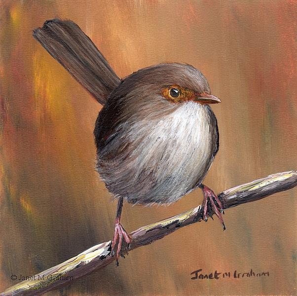 Art: Superb Fairy Wren (Female) by Artist Janet M Graham