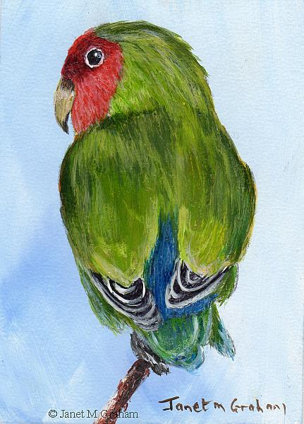 Art: Rosy Faced Lovebird ACEO by Artist Janet M Graham