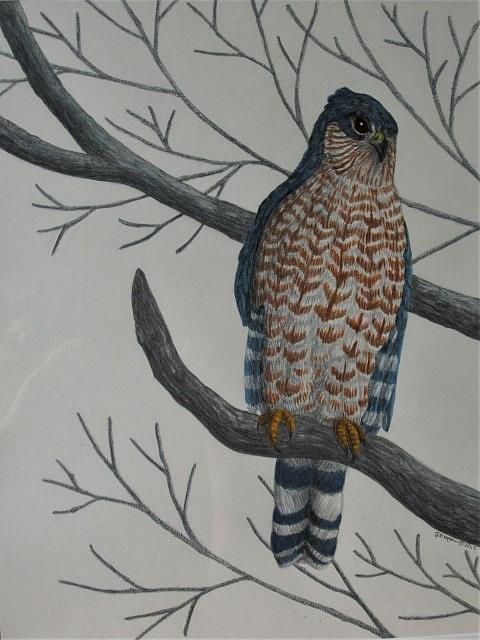 Art: Winter Watcher by Artist Jackie K. Hixon