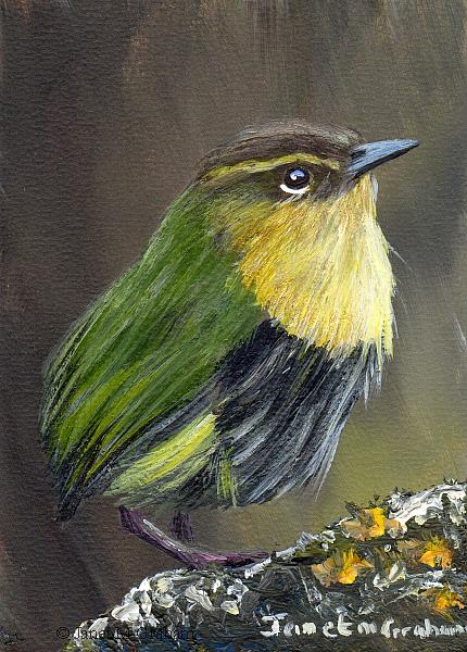 Art: New Zealand Rock Wren ACEO by Artist Janet M Graham